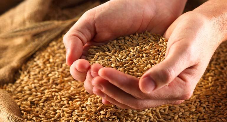 СССР в 1980-е годы стал первым в мире импортером, на которого приходилось 15% зернового мирового рынка.