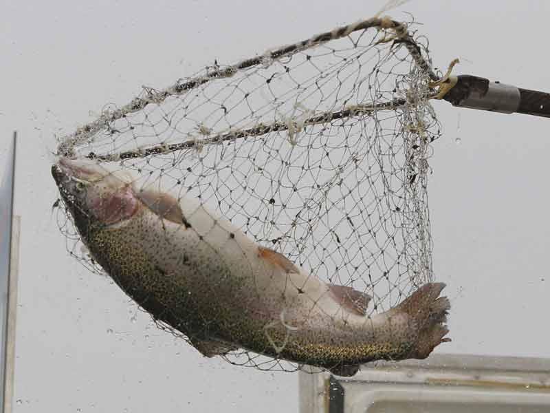 Рыбная ярмарка вМинске пройдет 18-19ноября у замка спорта